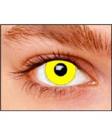Lentilles jaunes