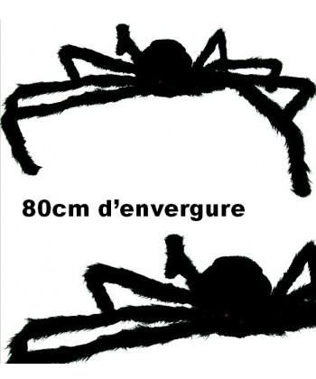 araignée velue geante