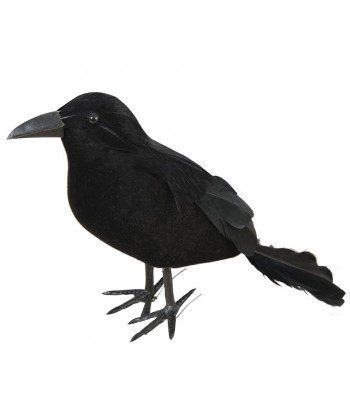 corbeau plumes